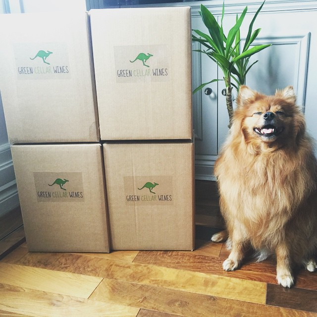 Weekend deliveries are ready! Mishka the Green Cellar Wines fluff ball🐶 our special summer promotion is here👆organic prosecco and no sulphites Prosecco £9 , biodynamic verdelho £15, biodynamic shiraz £17. No minimum orders! And free delivery on 6 bottles plus in the UK 👌check out our web www.greencellarwines.com #organic#organicwine#biodynamic#biodynamicwine #wine#organiclondon#londonwineshop#organicprosecco#prosecco#nosulphite#nosulfite#sulphite#sulfite#redwine#whitewine#sparklingwine#doc#australianwine #italianwine#buywine#pomeranian#winedog#cutedog#mishka#teddybear