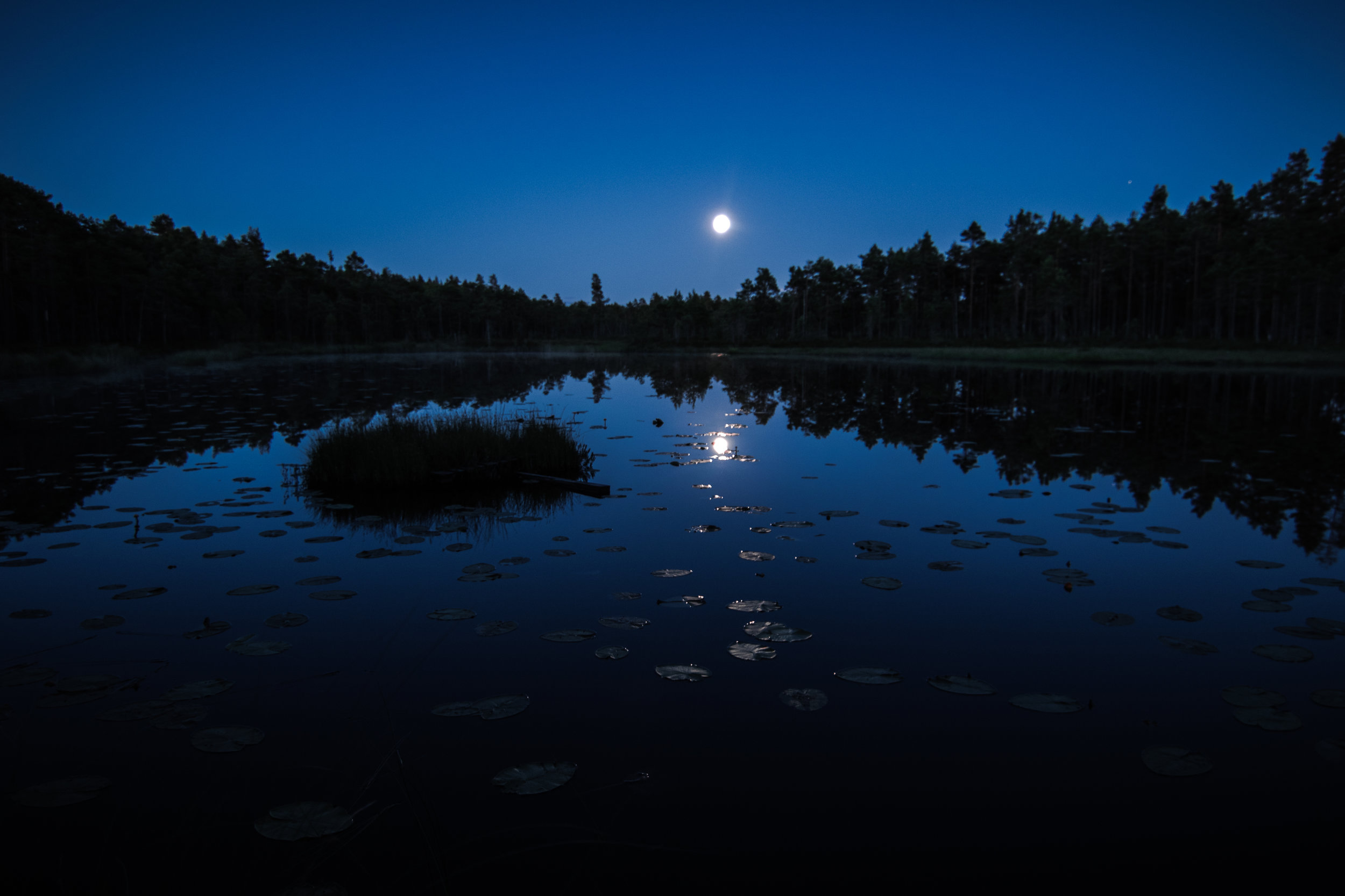 Moon over lake in wolf territory. Photo: Simon Green