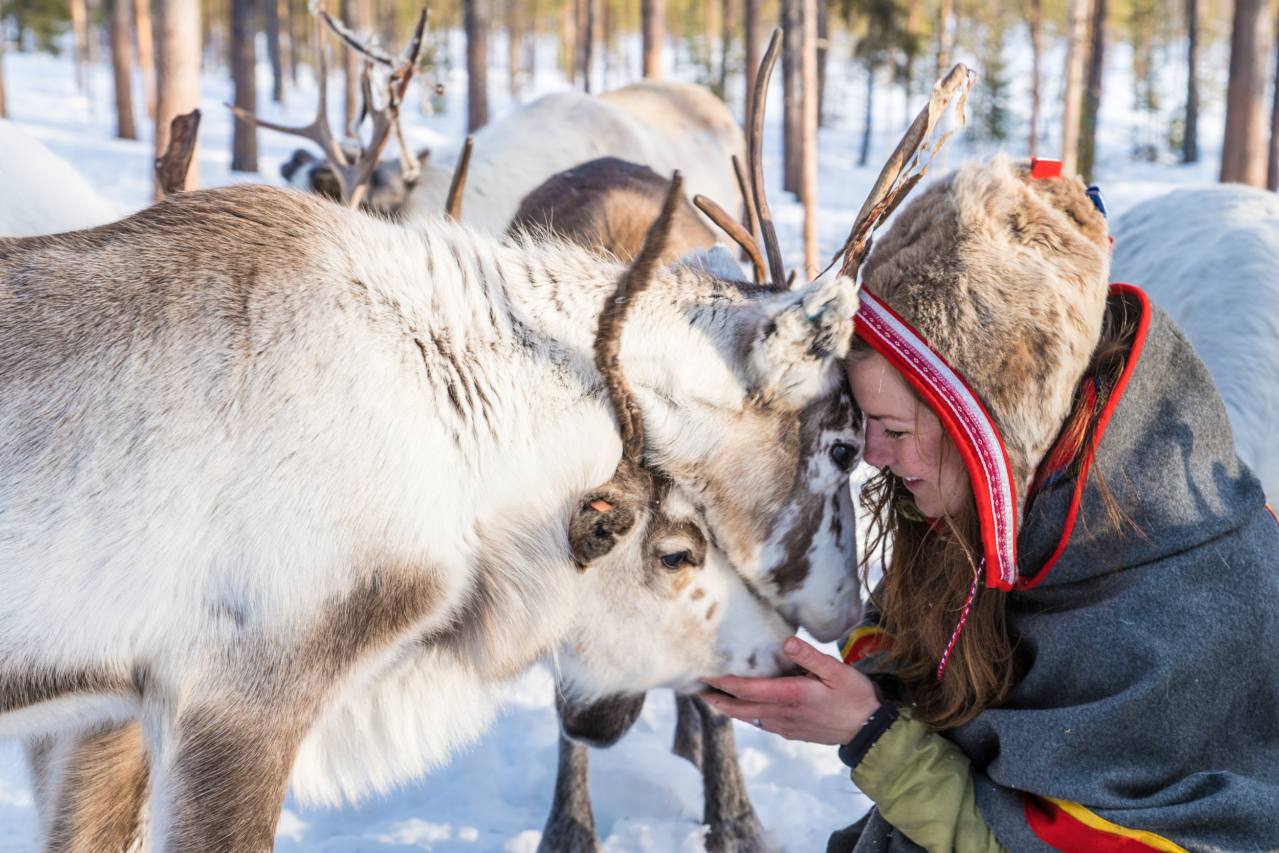 Meet Anna and her reindeer in Jokkmokk