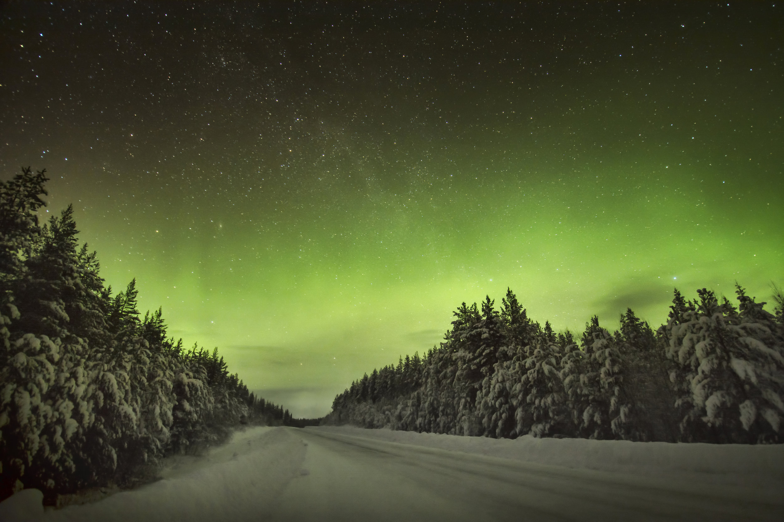 Green Northern Lights over a forest road. Photo: Paul Lampard