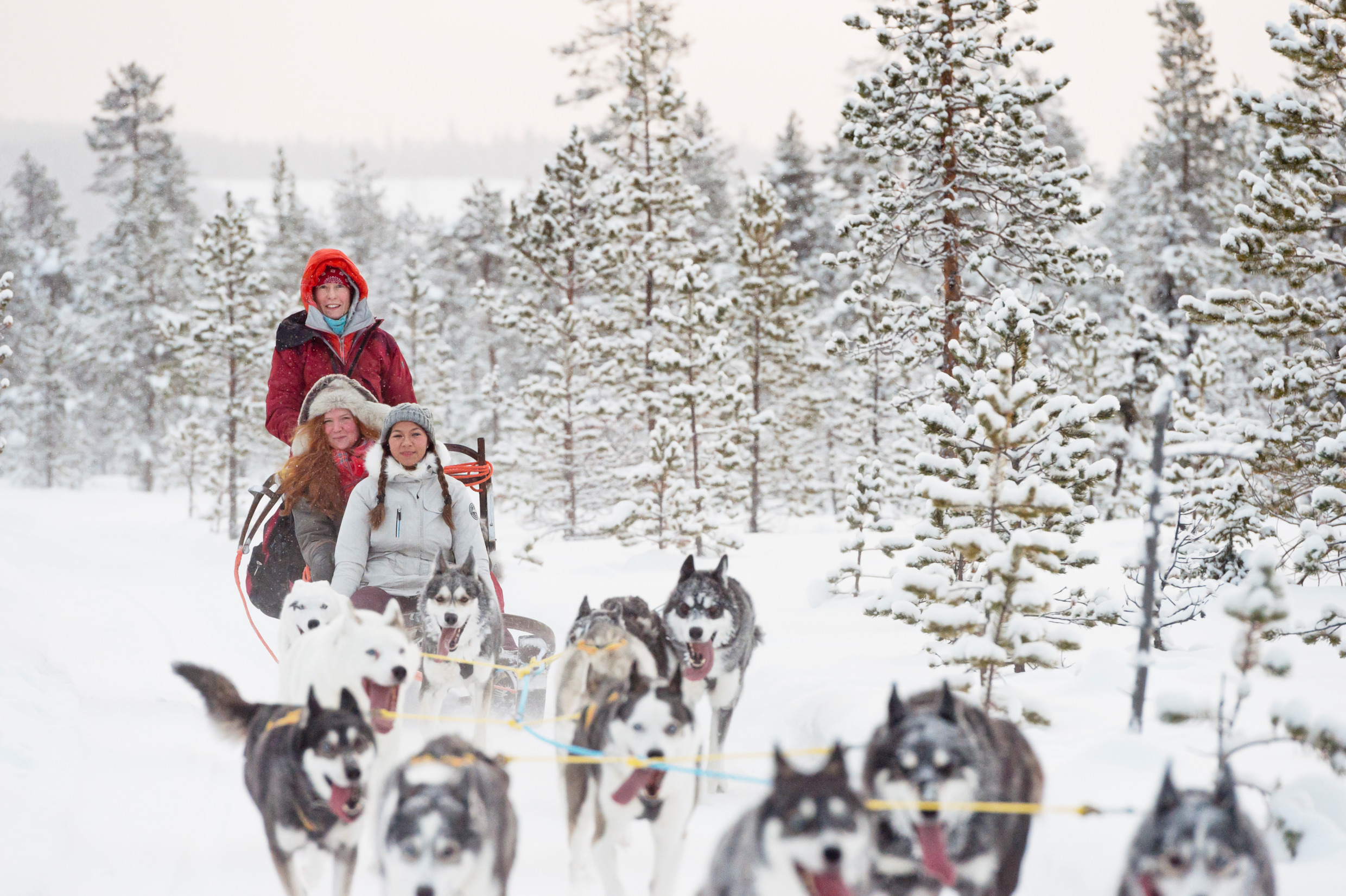 Dog sledding in Jokkmokk. Photo: Anna Öhlund/imagebank.sweden.se