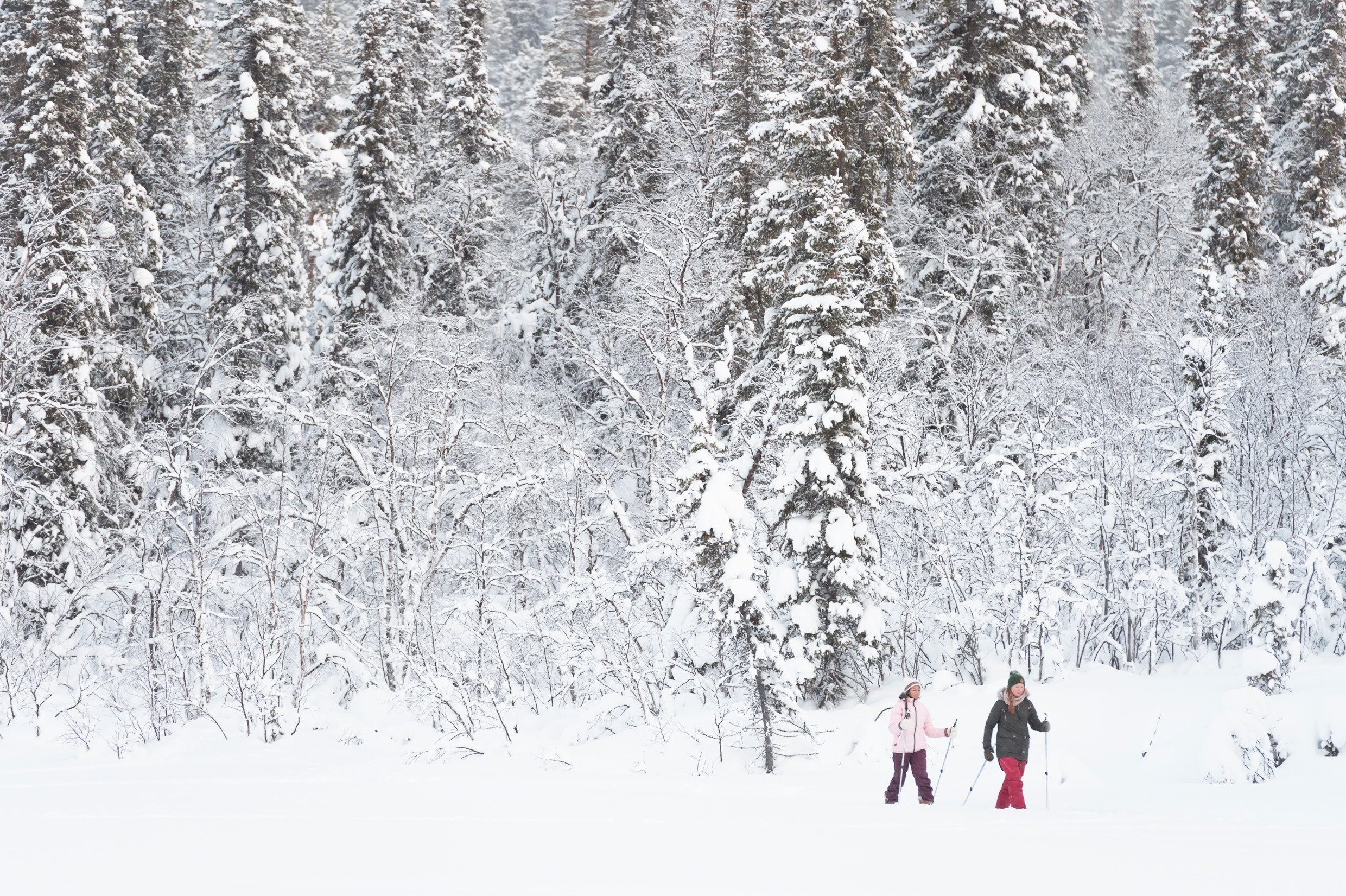 Try Nordic skiing or snowshoeing. Photo: Anna Öhlund/imagebank.sweden.se
