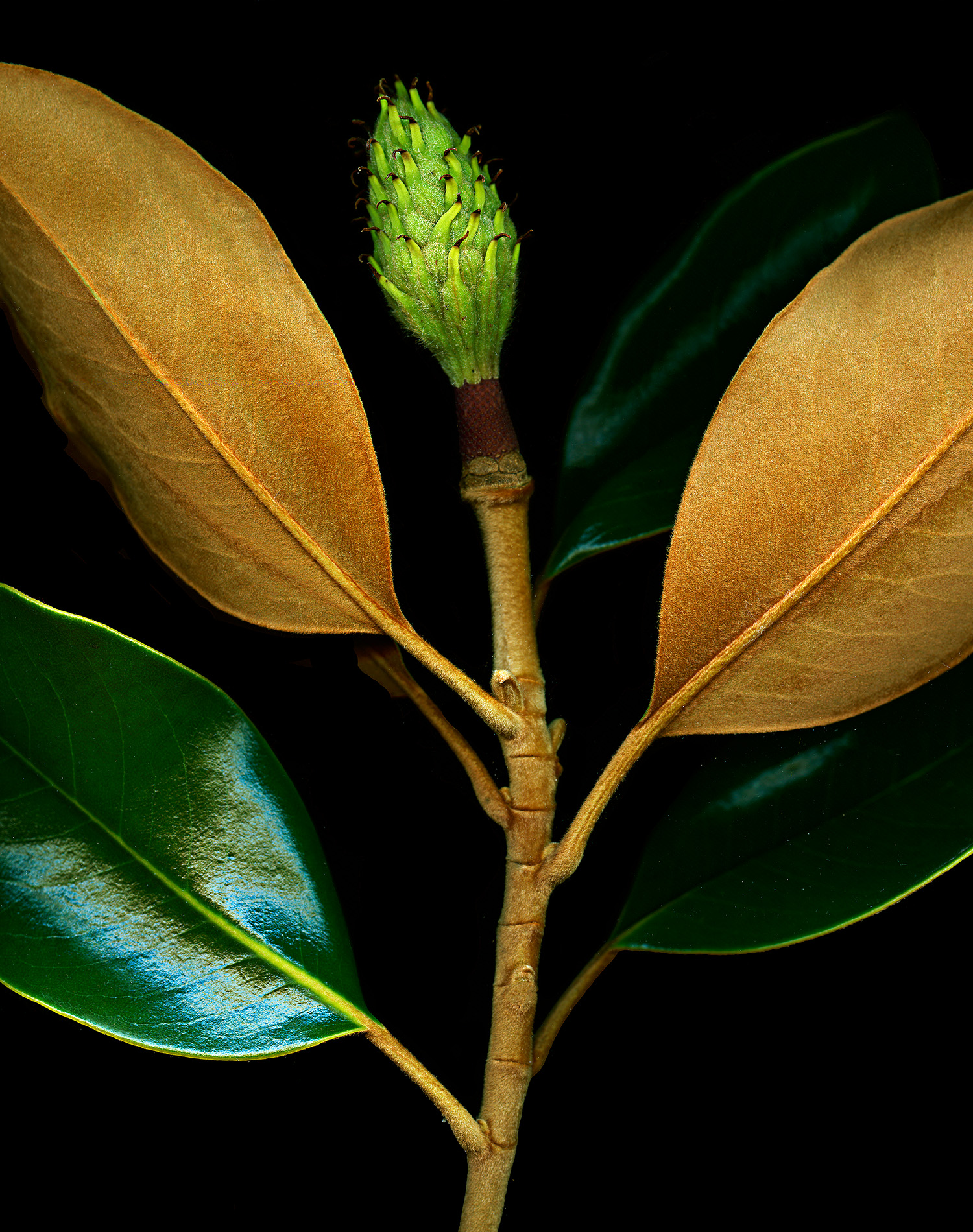 Magnolia-1900x1500-72dpi-Web.jpg