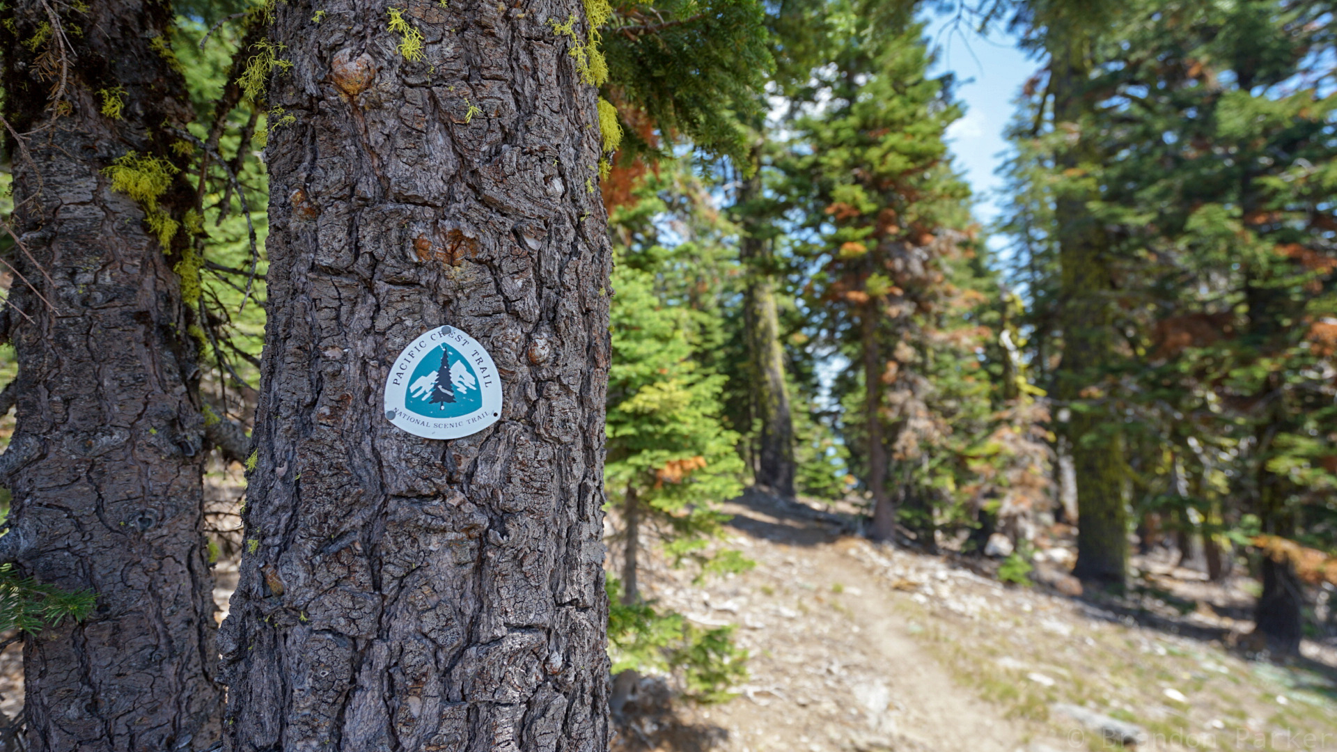 The PCT blaze that you can find on all manner of trees and posts for 2650 miles