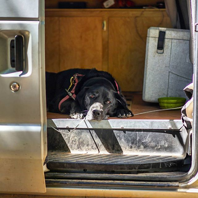 Dogs are people too! A tuckered out Bowie states at me as I eat my lunch and drink the beer that Snuggles brought for me at Trout Lake. #dogsofinstagram #dogsarefamily #pct #pct2018 #hikertrash #humansofthepct