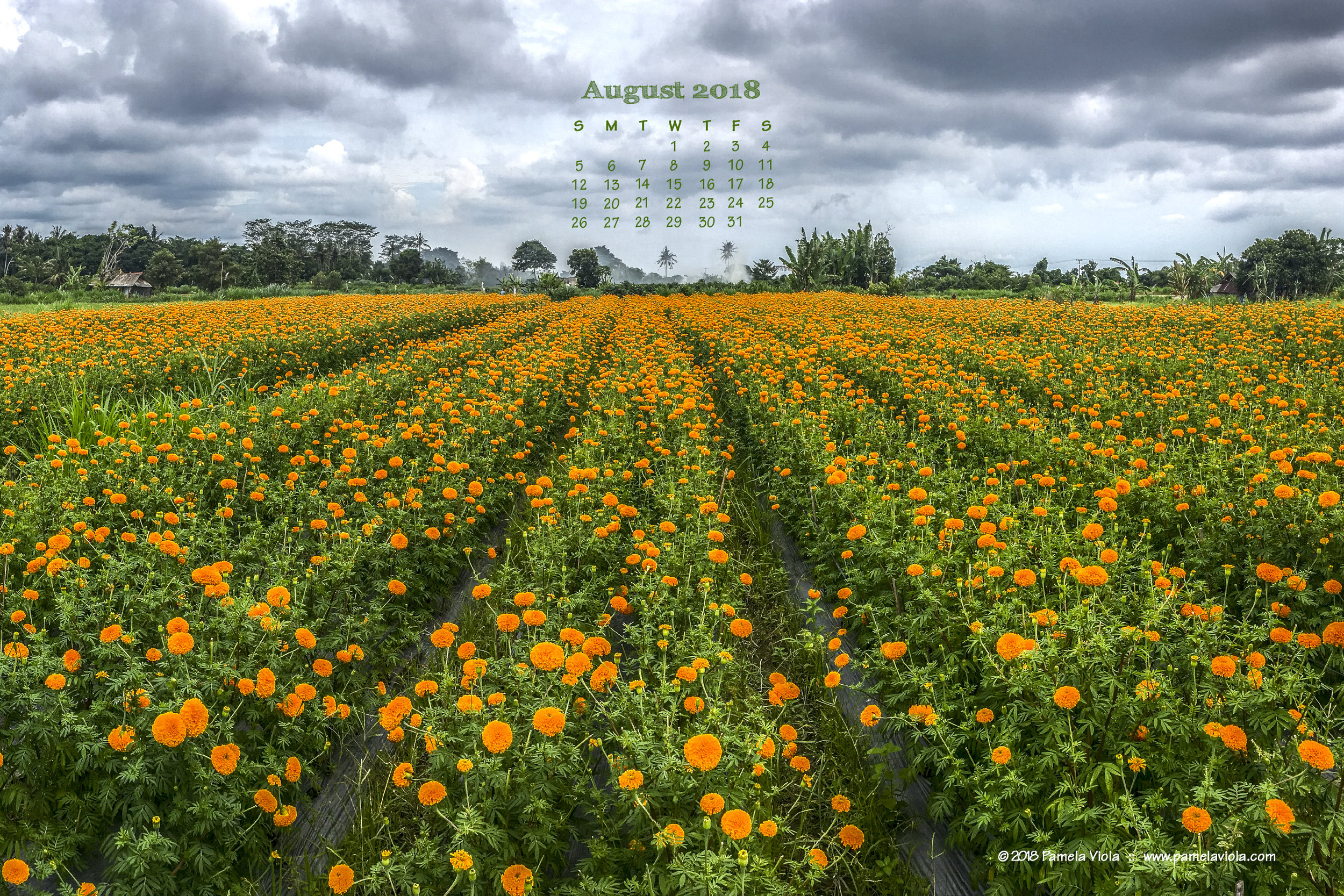 Marigold fields in Bali.