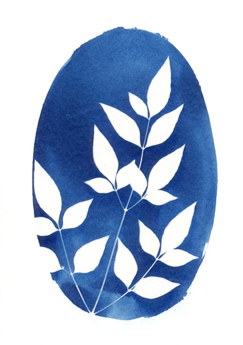 cyanotype cards-4.jpg