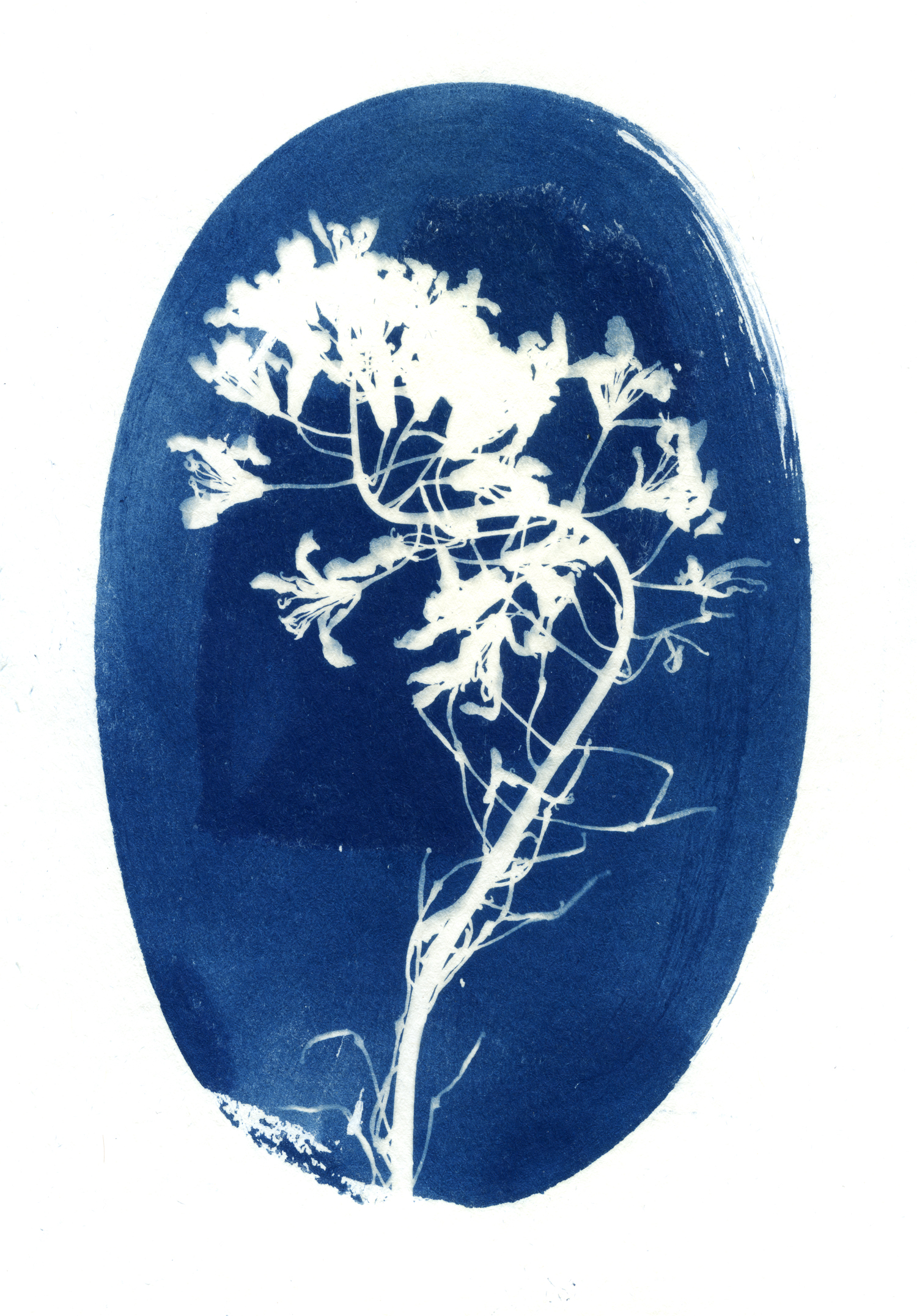 05 may 12 2019 cyanotype005.jpg