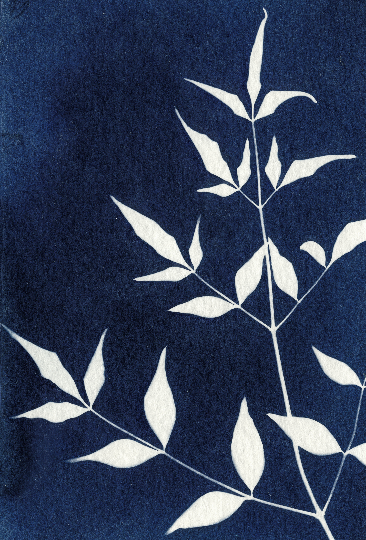 01 jan 01 2019_calendar_cyanotype 003a-edit.jpg