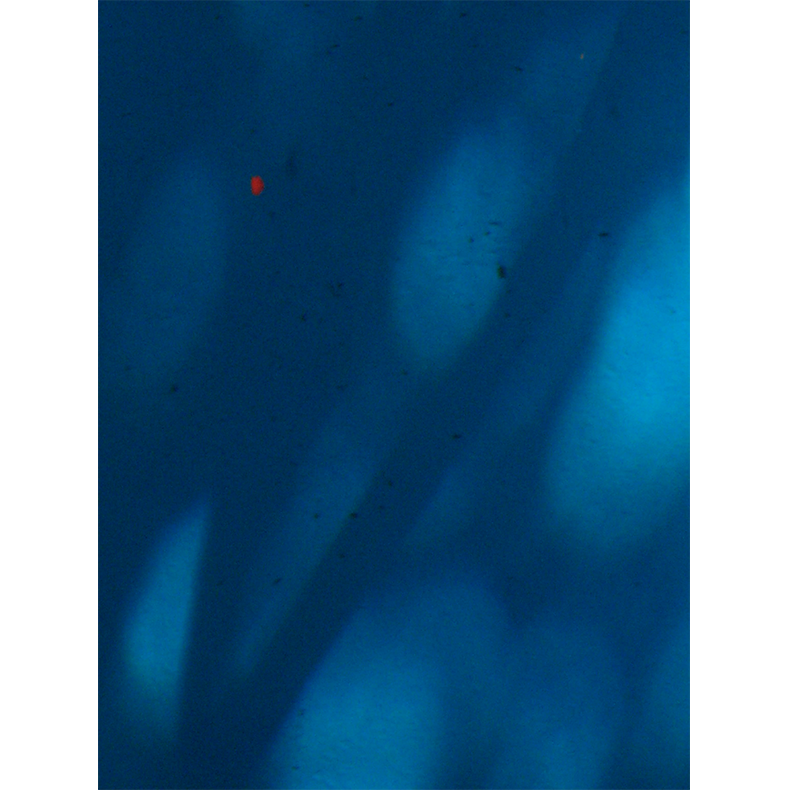 IMG_3372WaterRed.png