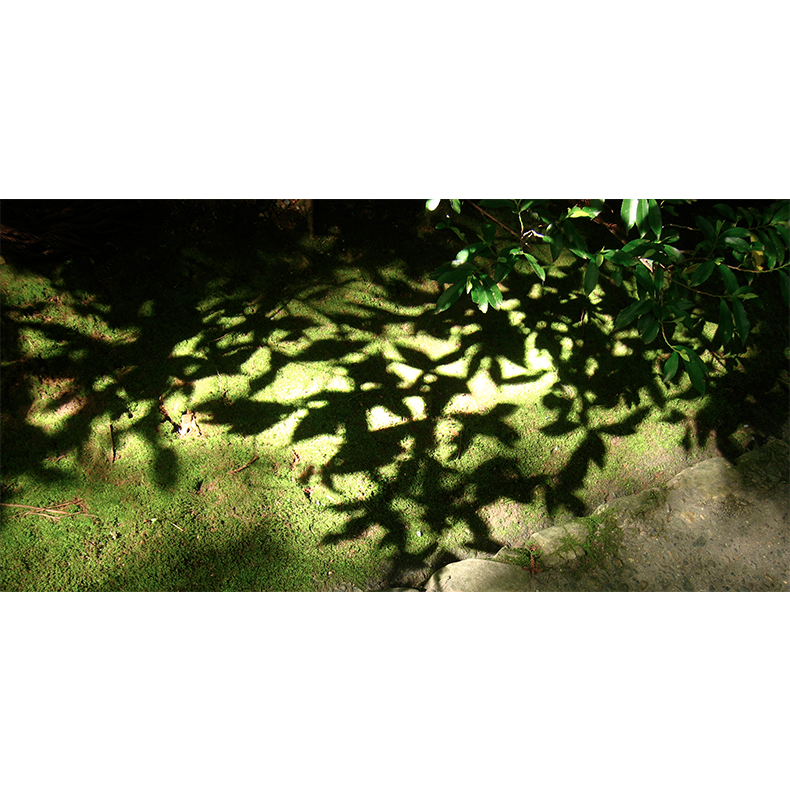 MossShadowStoneIMG_6563.png
