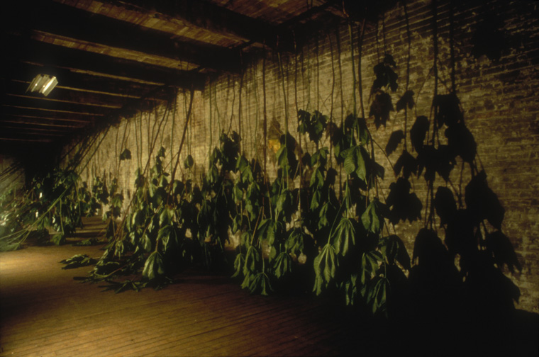 Installation at Chair Building, Kansas City, MO, DETAIL-castor bean plants at opening October 1997.