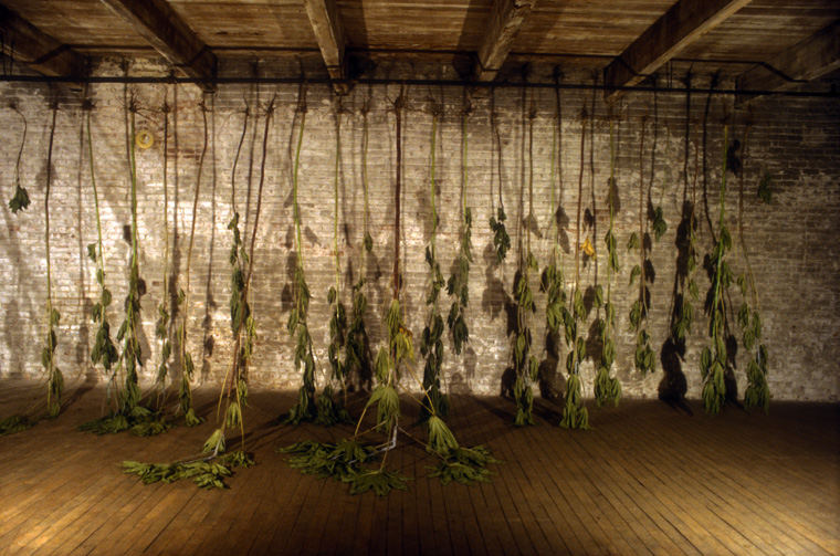Installation at Chair Building, Kansas City, MO, wilted castor bean plants, November 1997.