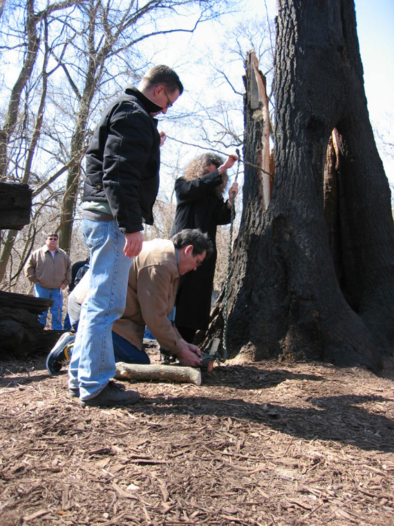 Matthew Dehaemers, Sean StandingBear and Karen McCoy tethering the Osage Orange sapling, tethering stake carved and pigmented by Sean StandingBear.