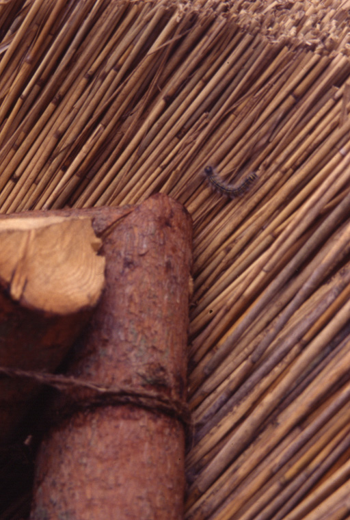 Detail interior thatching.