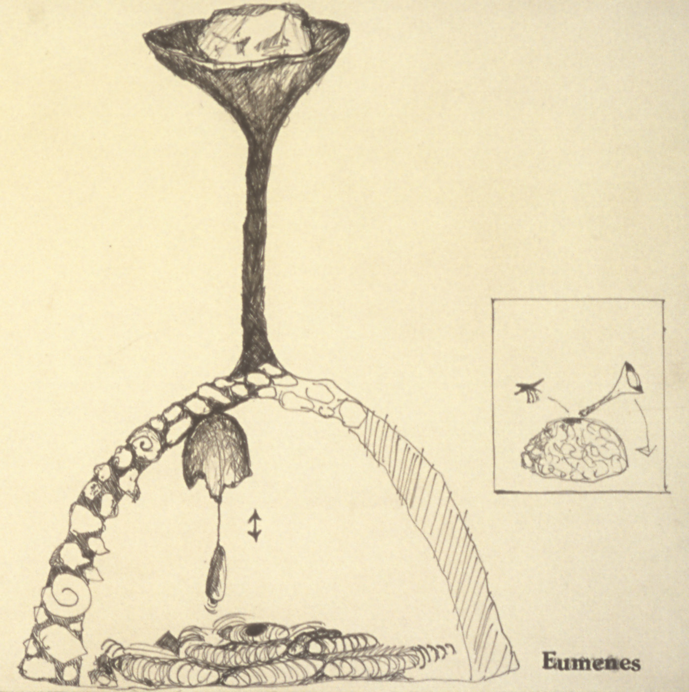 """Eumenes  from Henri Fabre's  The Mason Wasp , 1999  Ink on paper, 12 x 18"""", detail."""