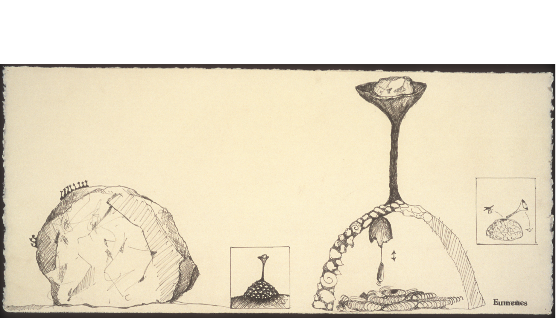 """Eumenes  from Henri Fabre's  The Mason Wasp , 1999  Ink on paper, 12 x 18""""."""