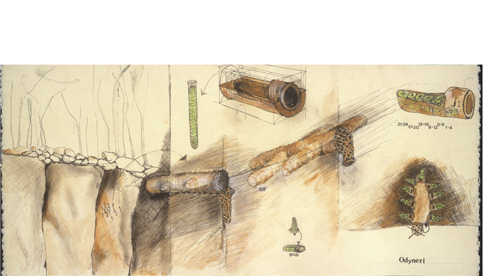 """Odyneri  from Henri Fabre's  The Mason Wasp , 1999  Mixed media on paper, 10 x 22""""."""
