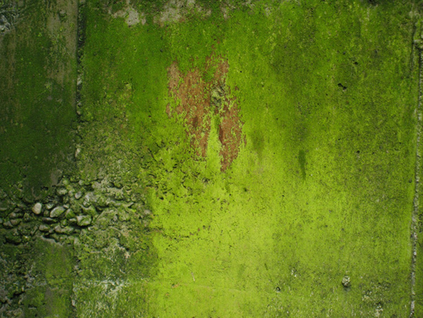 """North-facing retaining wall #1, roadside  2009  Tiansiang, Taiwan  Ink jet print on Hahnemuhle archival paper, 8 """"h x 10""""w"""