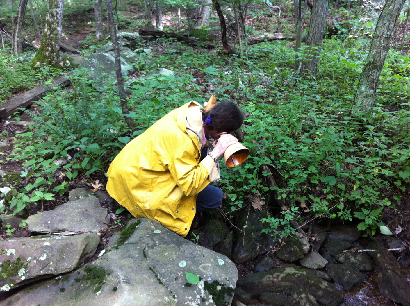 Sight and Sound Walks, collaboration with Robert Carl, listener with trumpet at Stony Creek, Blue Ridge Mountains, VA