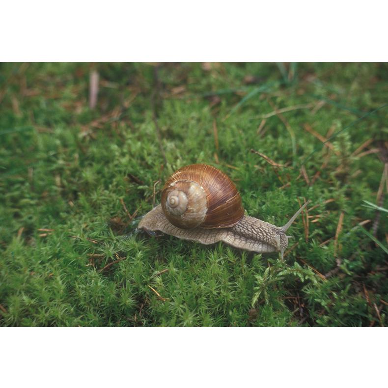 01.Snail.png