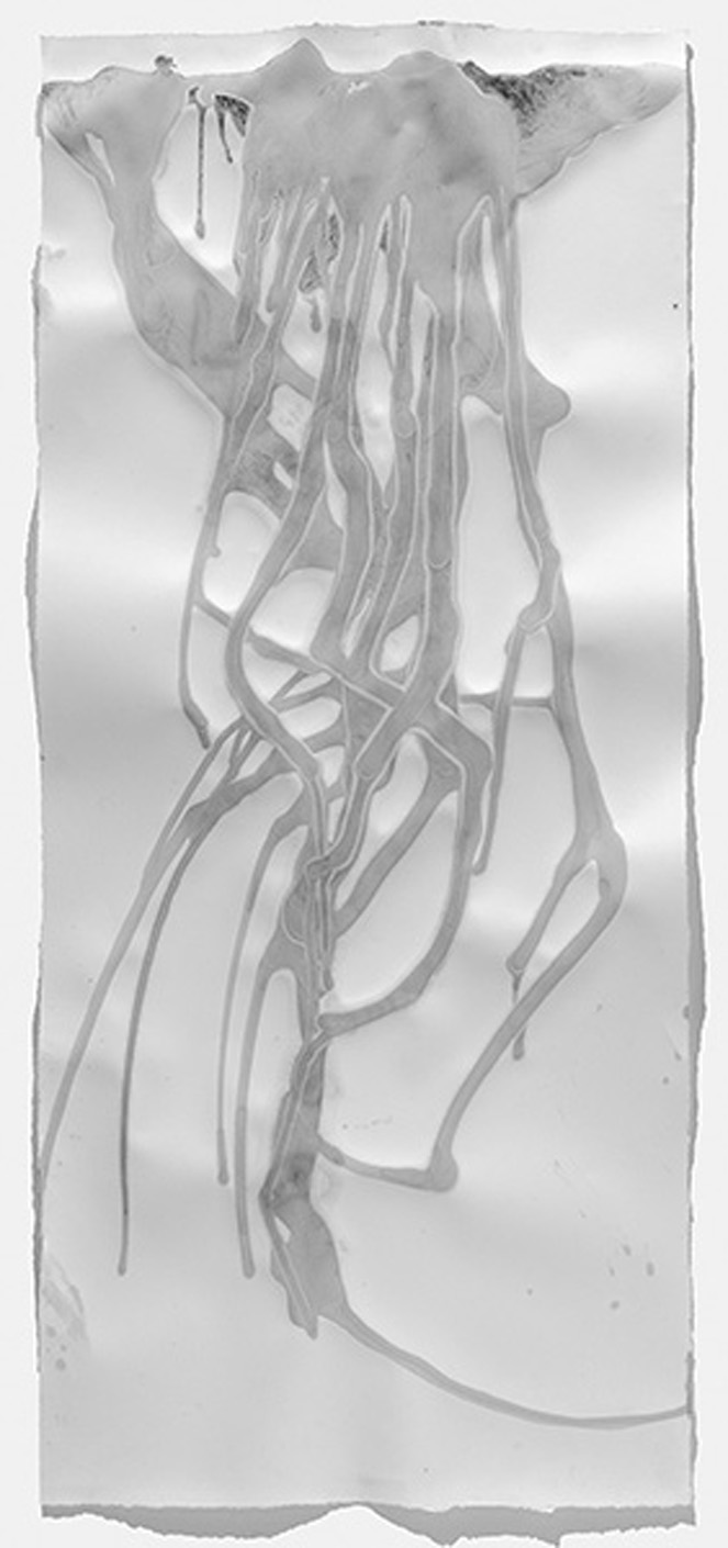 """Landslide   2015, Sumi ink with drybrush, 58"""" x 25.625"""""""