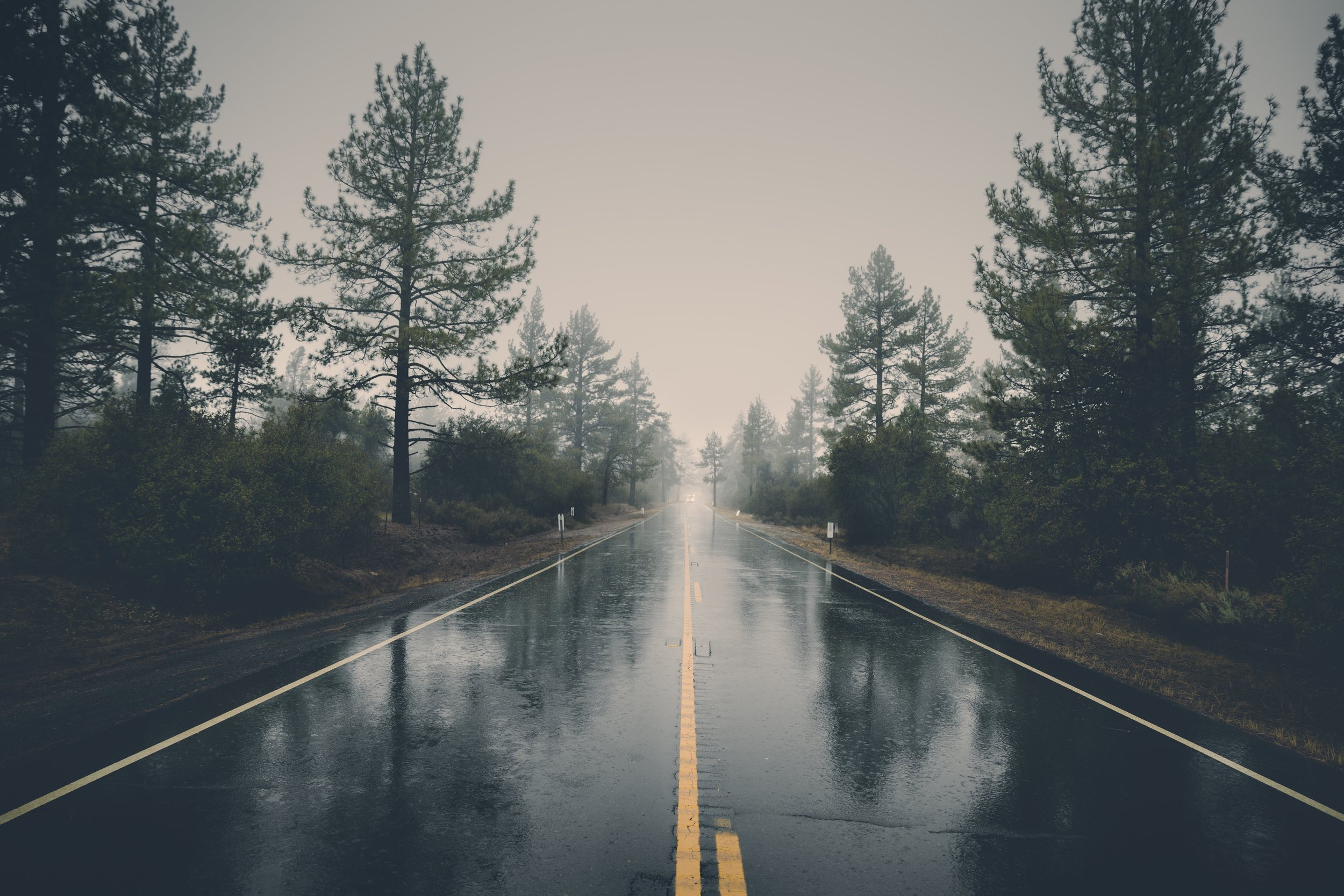 rainy forrest.jpg