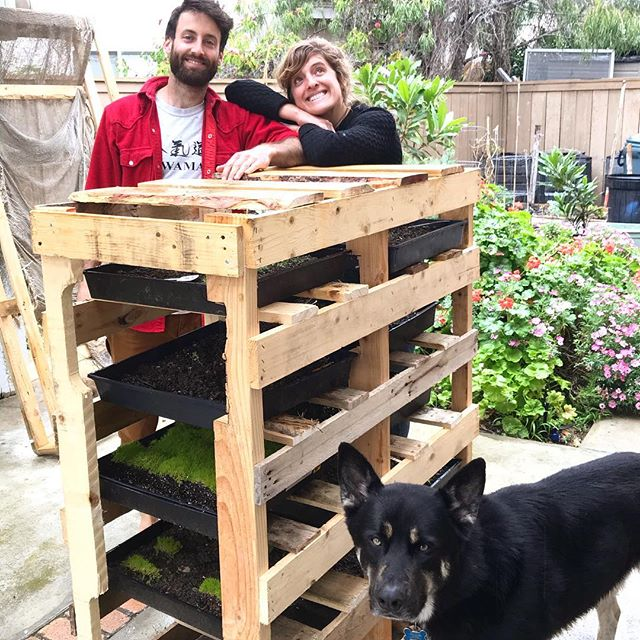 Sprouting station made with used pallets 🙌😊 #sustainability #coworkingspace #nomadlife #abundance #travelwithapurpose Thanks @olymperabate n @davessdad for the help 🙏🏼😊 Created by @zestexplorer