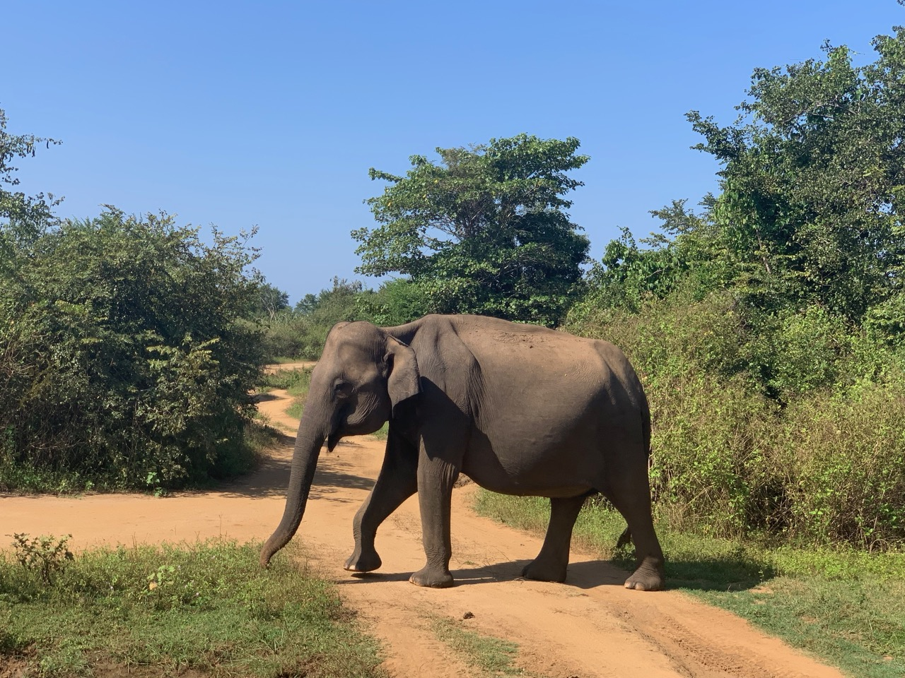 Elephant on the road.jpg