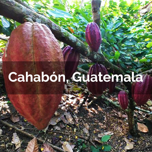 Cahabón, Guatemala - 2017 Harvest