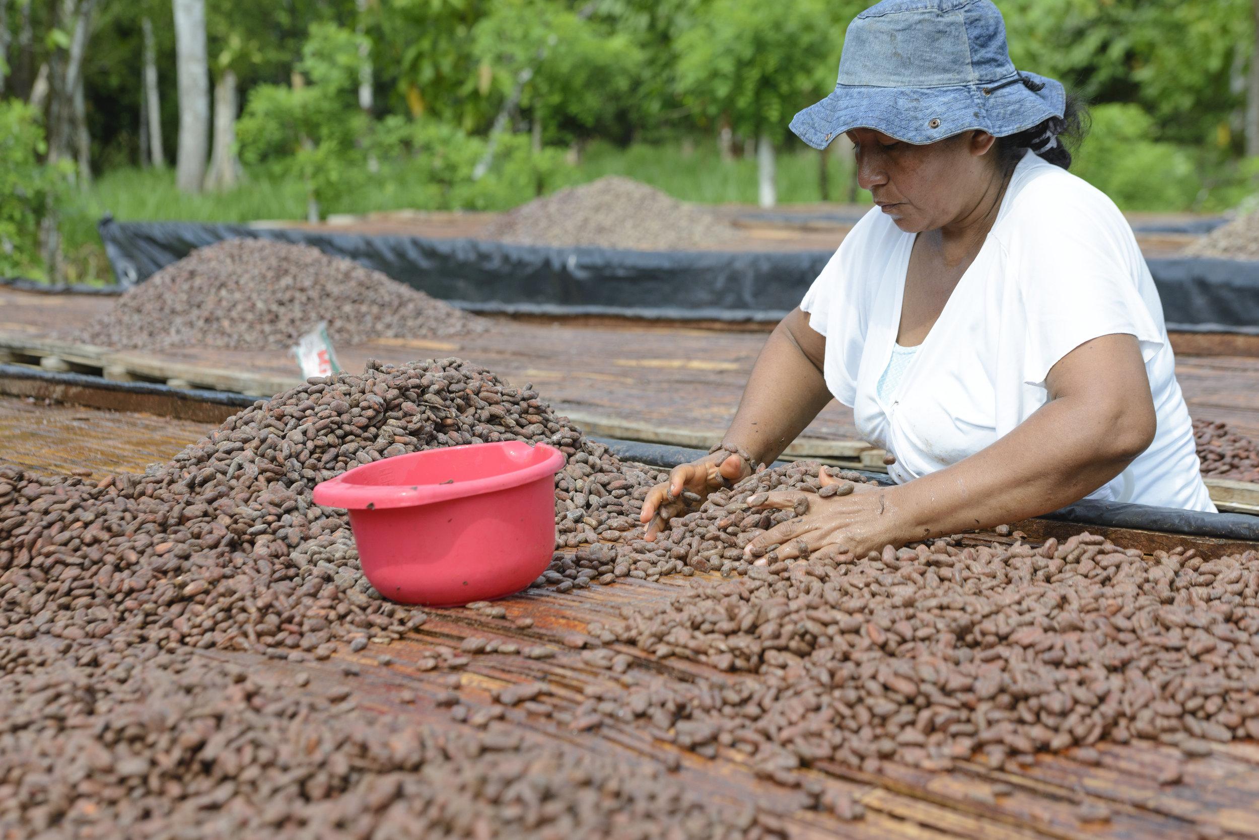 Blanca Vivera, a member of the Cortepaz Tumaco association and second generation farmer