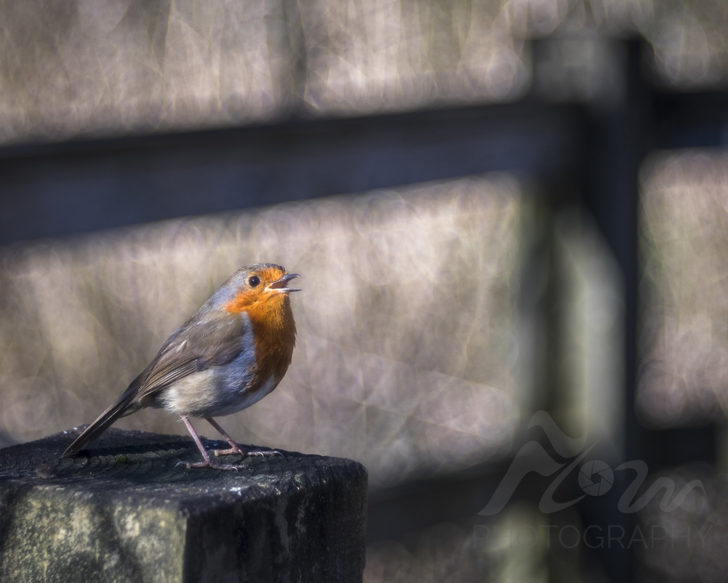Songbird   The bright joyous song of the Robin welcomes in the Spring.