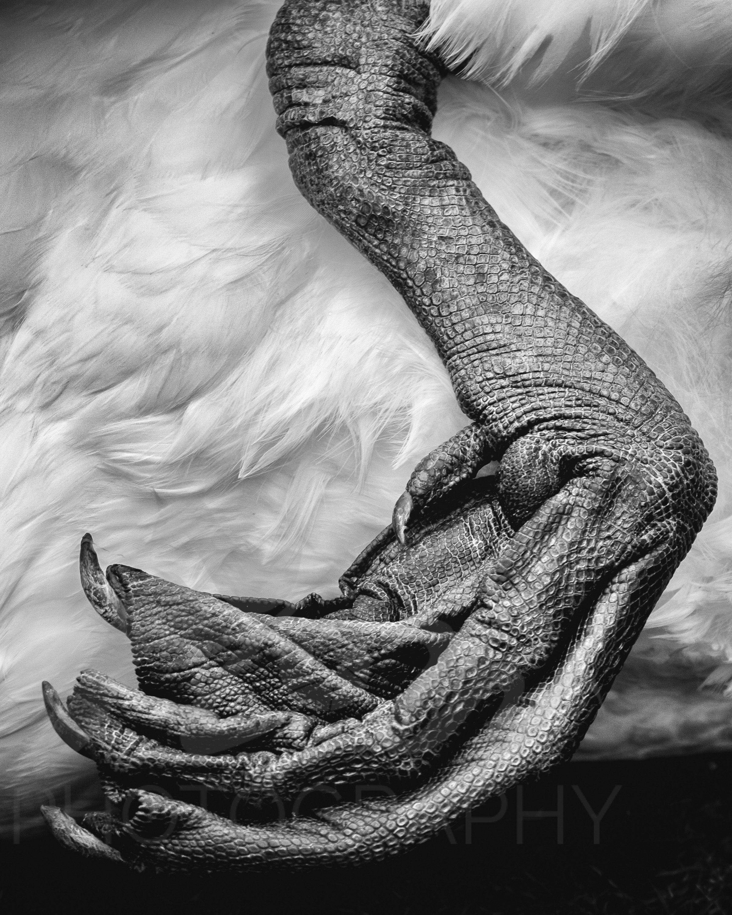 Positively Prehistoric   Swans are such magnificent creatures. I love how the textures here are reminiscent of a reptiles skin.