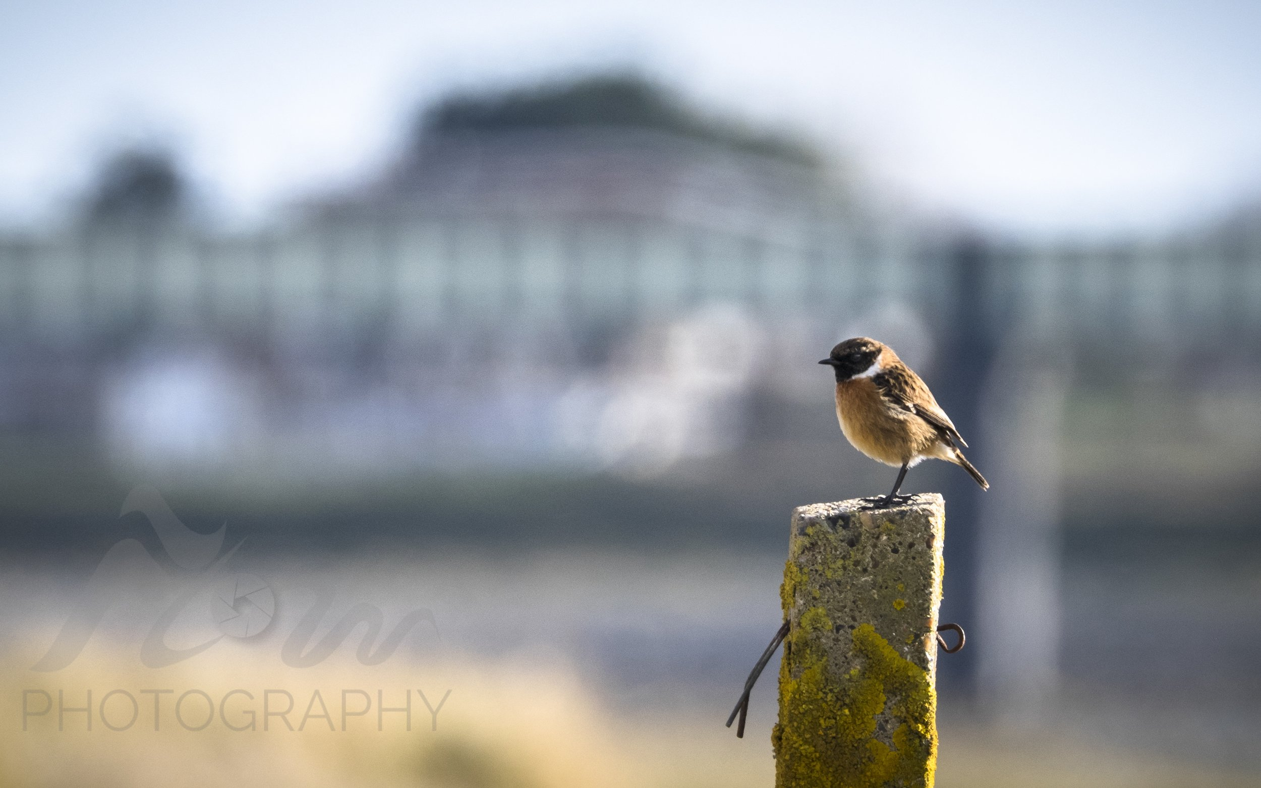 Admiring The View   A riverside companion on my walk along The Adur. Stonechats are forever one step ahead of you!