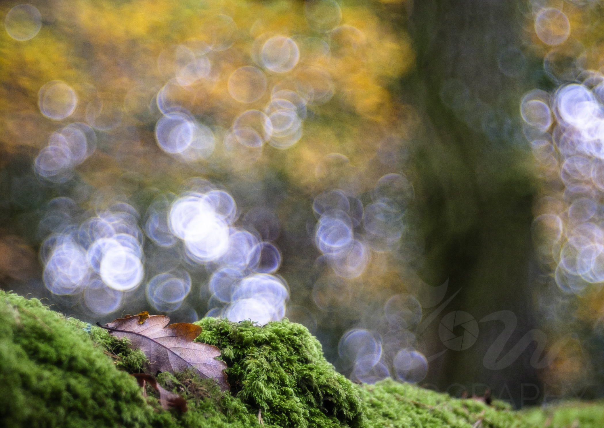 Nestled   Into the forest... Autumn is an abundant time and everything is covered in moss. A magical time of year!