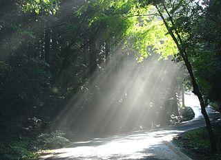 light and leaves.jpg