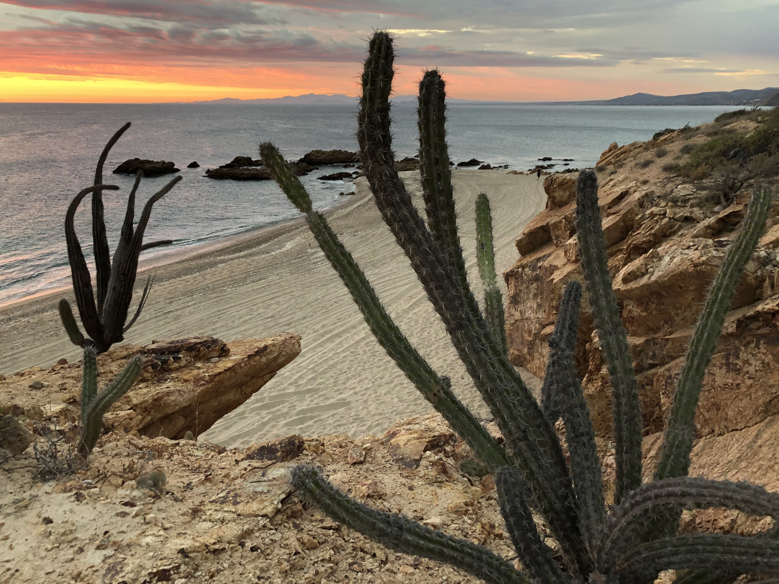 201901_Cactus_Sea_of_Cortez.JPG