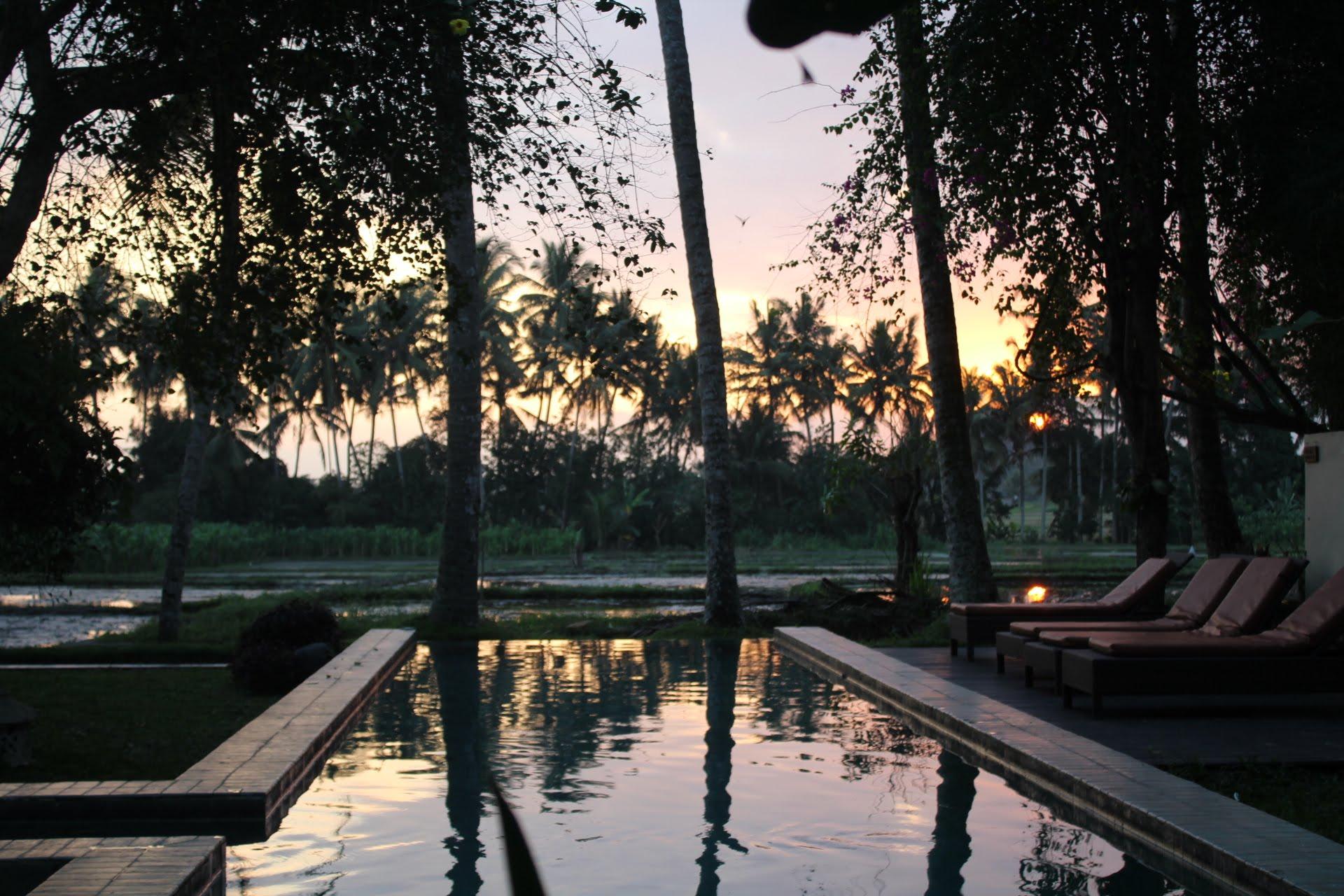 Vista da piscina com uma plantação de arroz ao fundo.