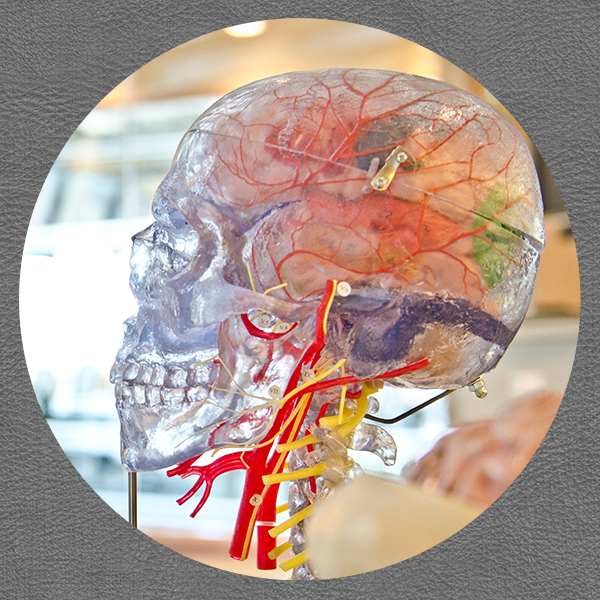 addiction_treatment-ICSWA-brain.jpg
