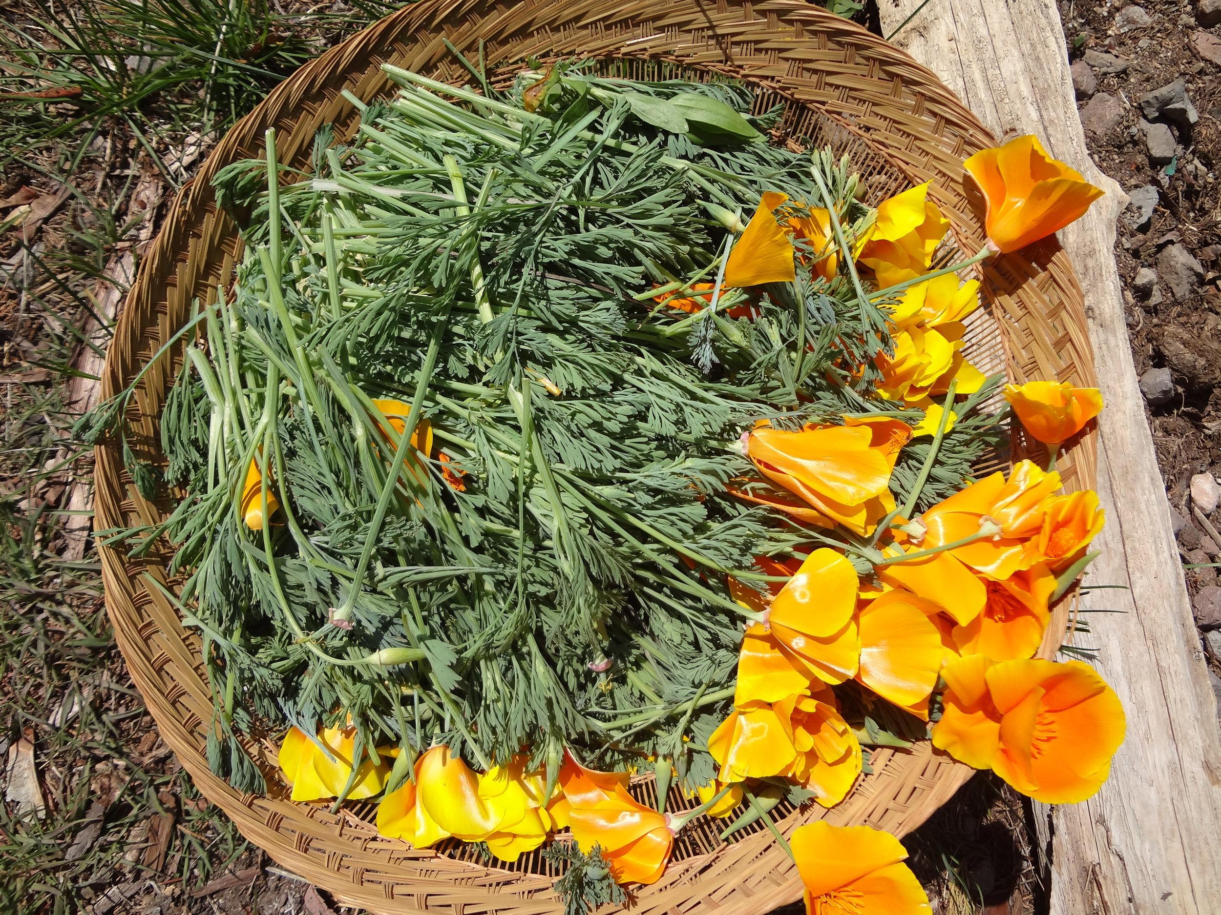California Poppy Flowers