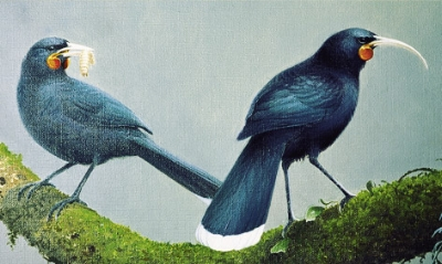 The legendaryHuia Bird- the only species in which the male and female have different beak shapes!