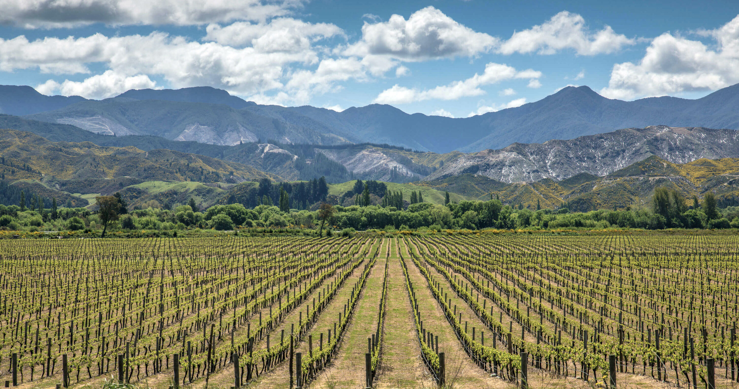 NZ- Gravel & Loam Vineyards.jpg