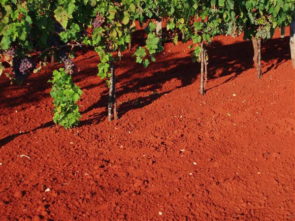 terra rossa- Istria.jpg