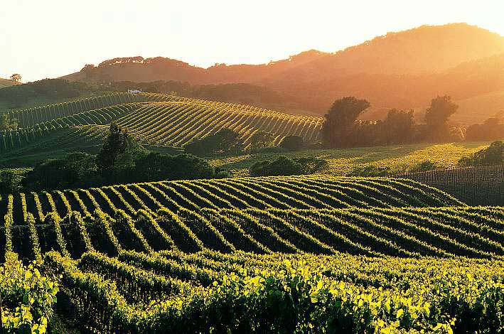 Sonoma-County-California.jpg