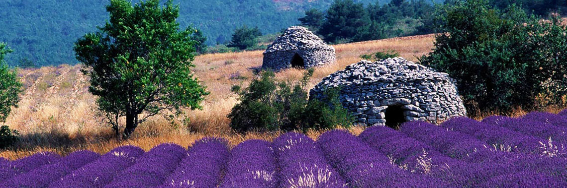 provence-vineyards-lavender.jpg