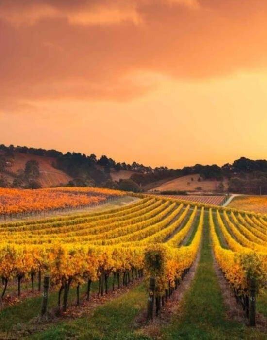 nocton-vineyard-richmond-oa4oozwmh6nygqquhky1vs03mvc9j2gspepgggi388.jpg