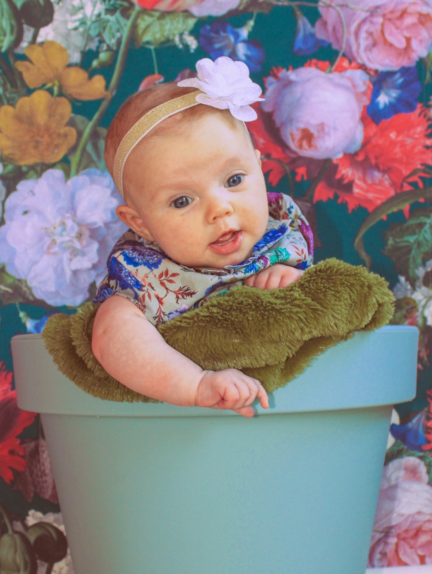 Did you really? Yes, I photographed amelia in a flower pot! :p  Amelia, 6 weeks.