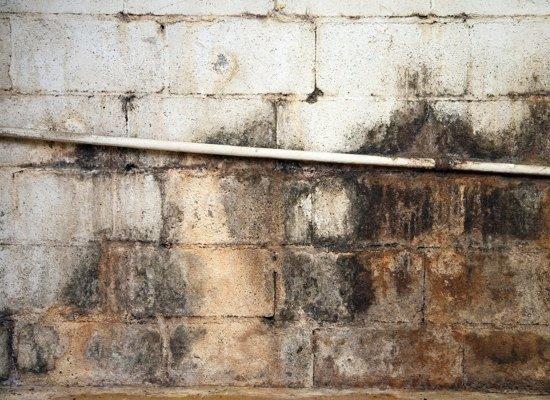 mildewed-foundation-walls.jpg
