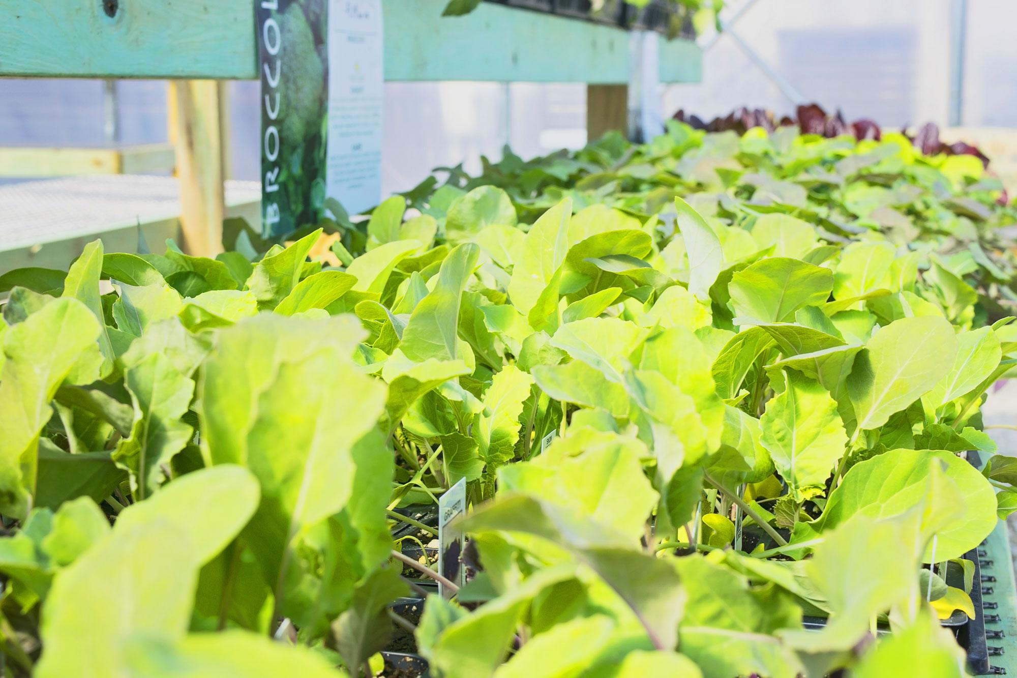 Greenhouse-Plants-Large.jpg