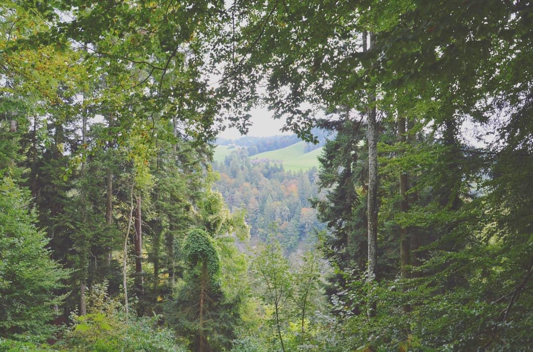 A wee peep through the Swiss woods   Thun, Switzerland